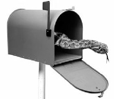 Rattlesnakes were everywhere - even in mailboxes